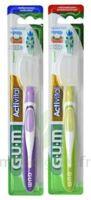 Gum Activital, Souple à SAINT-GERMAIN-DU-PUY